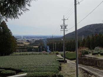 200228水沢めぐり06、光明寺跡近くの茶畑.JPG
