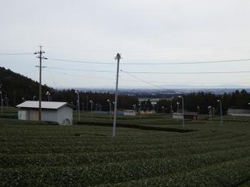 200228水沢めぐり16、県道44号沿いの茶畑.JPG