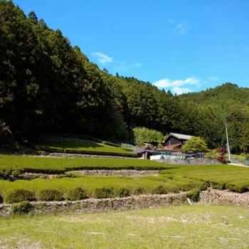 200508茶山調査(美杉町川上・丹生俣)04、川上①.jpg
