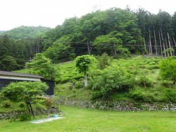 200522茶山調査「美杉町」10、川上山茶園.JPG