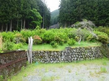 200522茶山調査「美杉町」15、川上小黒田地区(栽培放棄).JPG