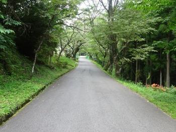 200806茶山合同調査12「三多気」04、桜並木(真福院参道).JPG