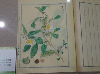 s_191013西尾市岩瀬文庫09、「本草図説」.JPG